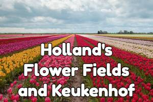 Holland flowers fields and Keukenhof tulip garden