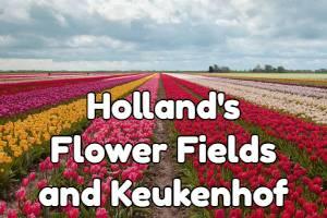 Holland flowers fields and Keukenhof tulip garden