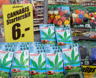 Cannabis Starter Kits amongst the tulip bulbs at Amsterdam's Flower Market