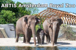 Artis Amsterdam Royal Zoo
